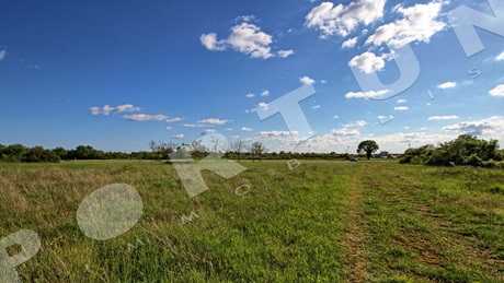 Agricultural land 5.770 m2 for sale in Bale in Istria