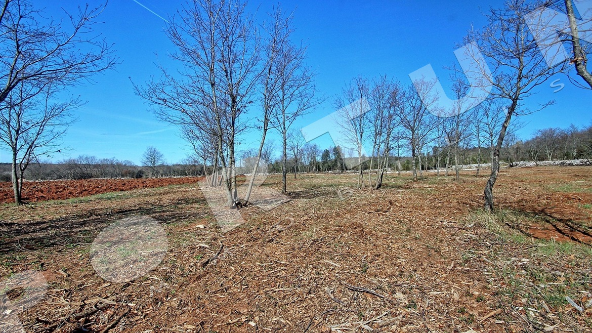 Agricultural land 20.360 m2 for sale near Rovinj in Croatia, 290.000 €